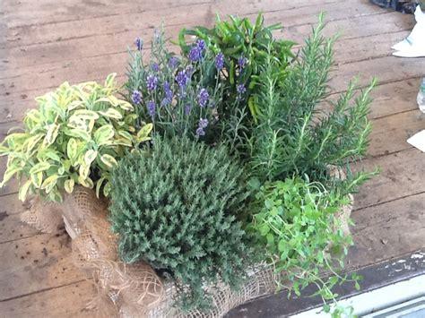 giardiniere brescia gallery di il verde mariani giardiniere progettazione