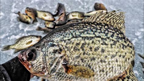 targeting crappie panfish ice fishing tips