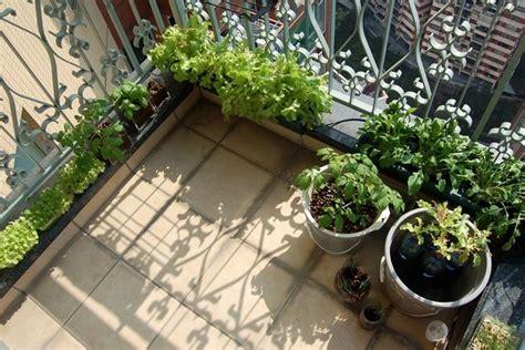 orto sul balcone kit orto  balcone kit  orto sul