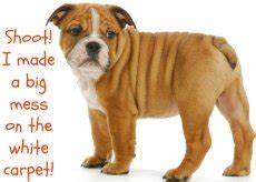 reasons dogs throw up vomiting remedies