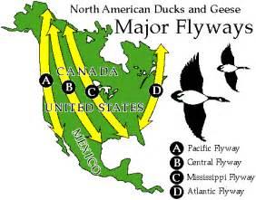 canada goose migration maps
