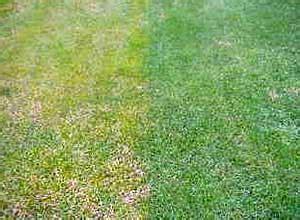 Pilze Im Rasen Kalk by Gelber Rasen Rasenm 228 Tests