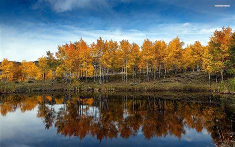 golden autumn forest reflect wallpapers golden autumn