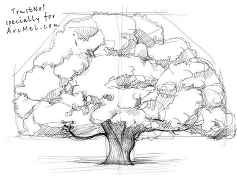 oak tree drawing old oak tree sketch www pixshark com images galleries
