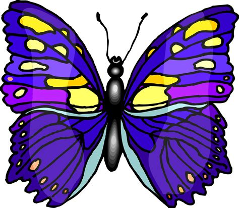Picture Of A Cartoon Butterfly Clipart Best Animated Images Of Butterfly