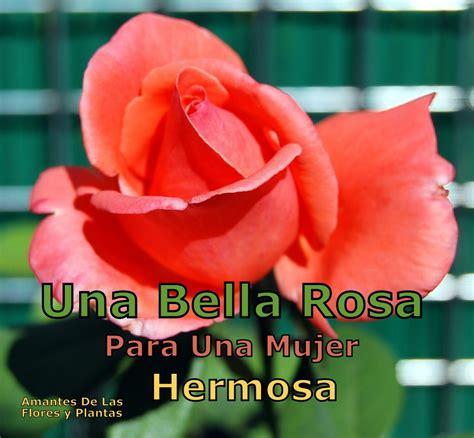 imagenes que hermosa mujer flores y plantas una bella rosa para una mujer hermosa