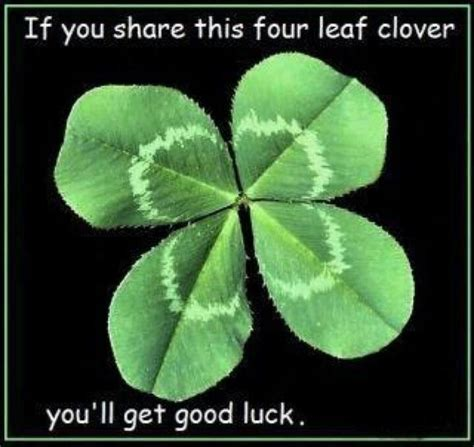 Be Lucky With Tracey Boyds Four Leaf Clover Handbag At Debenhams 25 unique four leaf clover ideas on five leaf