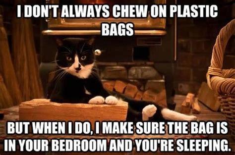 Funny Kitty Memes - funny cat memes