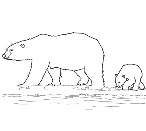 ice bear coloring page coloriage famille d ours polaires coloriages 224