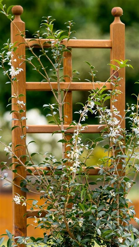 Small Trellis Planter by Small Trellis With Planter
