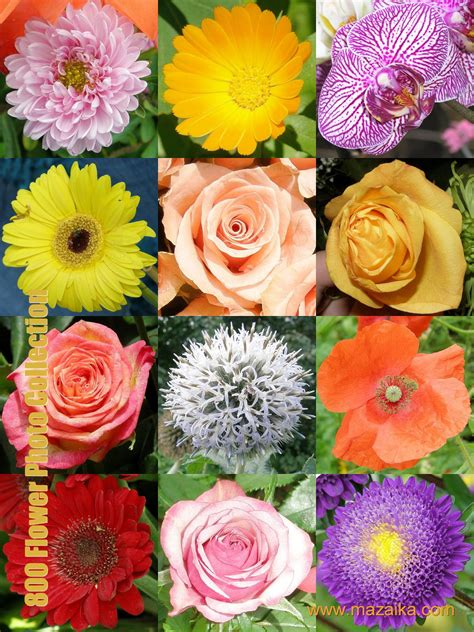 11 beautiful pictures of flowers project 4 gallery flower pictures download beautiful flowers