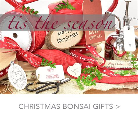 bonsai direct gift experience