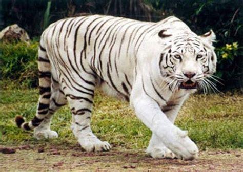 los mejores dibujos de animales ranking de mejores animales del mundo listas en 20minutos es