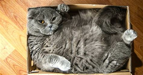 15 Cats Who Refuse To Accept That Their Boxes Are Too Small Empty Box Weight