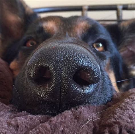 my puppy s nose is my s nose is always is something wrong barkpost