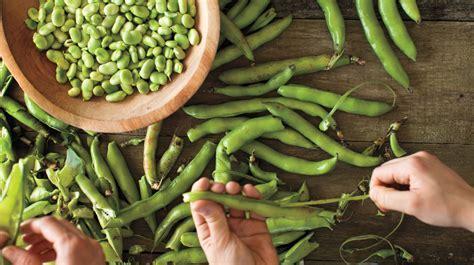 Fava Bean Recipes   Martha Stewart