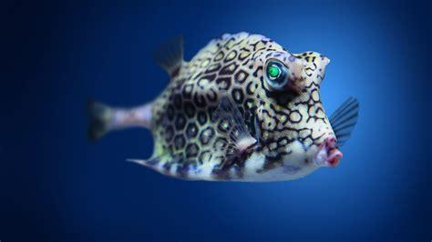 Wallpaper Boxfish, cowfish, Atlantic, Indian, Pacific
