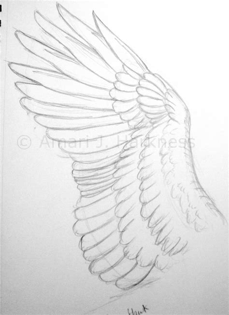 Drawing Wings by Sketching With Reckless Abandon Drawing Bird Wings