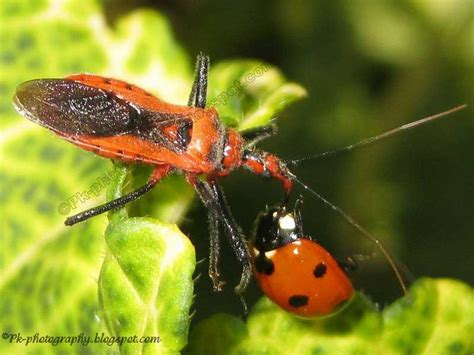do ants eat aphids what do insects eat nature cultural and travel