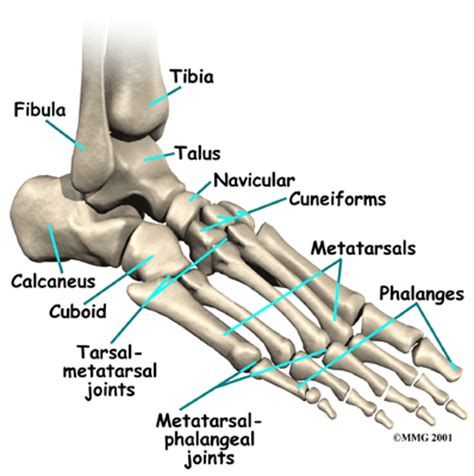 small bones fracture of the foot singapore sports orthopaedic surgeon