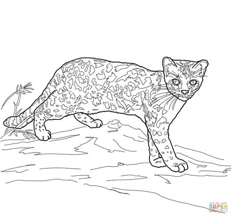 coloring pictures of wild cats feral cat coloring pages coloring pages