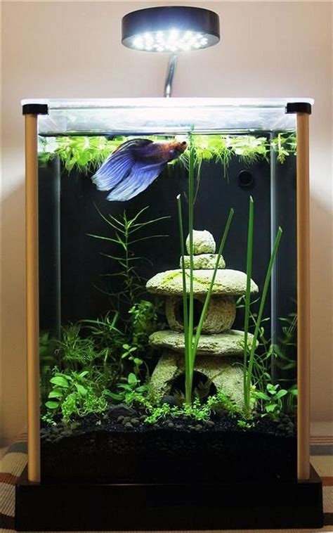 aquarium design exle aquarium original design
