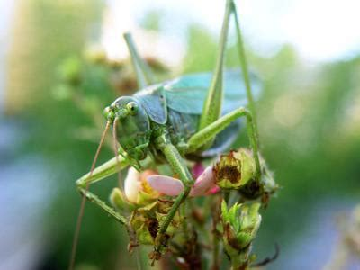 Common Vegetable Garden Pests Vegetable Garden Pests