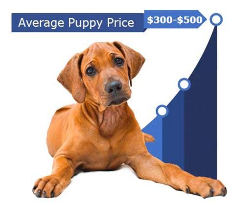 rhodesian ridgeback puppy cost rhodesian ridgeback price rhodesian ridgeback puppy costs