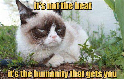 New Grumpy Cat Memes - new grumpy cat memes