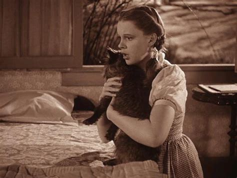 toto the toto the wizard of oz images toto and dorothy wallpaper and background photos 11523895
