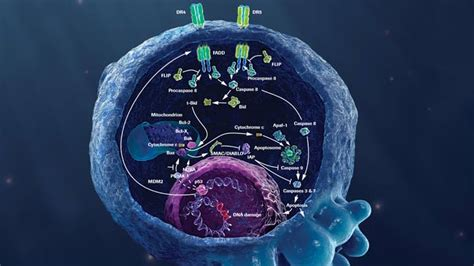 Oncology Cancer 4 In 1 C Roche About Oncology