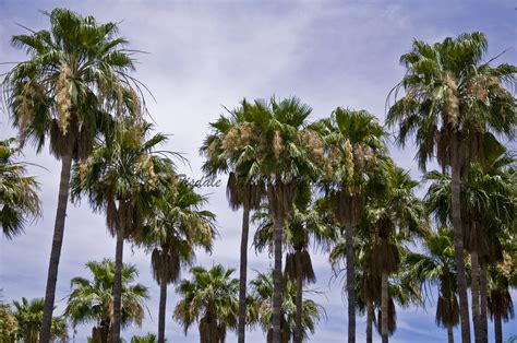 palm tree palm tree thewallgalleryblog