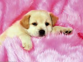 Cute Dog Wallpapers by Cute Dogs And Puppies Wallpapers Wallpaper Cave