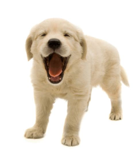 puppy png a smiling free images at clker vector clip royalty free