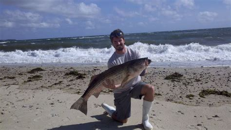 fishing report cape cod surf fishing report for cape cod october 12