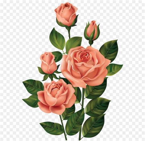 Rosa Clipart - clip roses png clipart image png