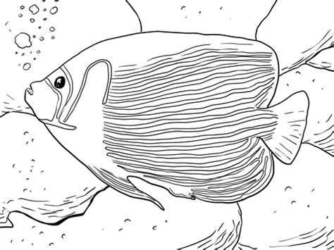 flame angel fish coloring page coloring pages