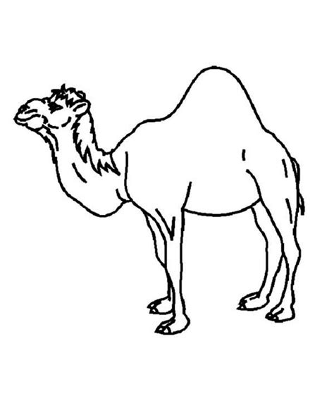 Camel Coloring Pages To Download And Print For Free Camel Coloring Page