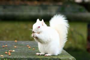 Trees White Flowers - white squirrel pictures