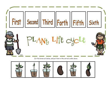 cycle of plants and animals worksheets lesson 8 introduction cycles
