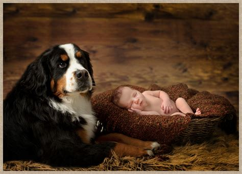 best family dogs large big family baby s best friend