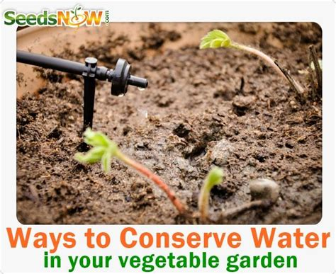 Ways To Conserve Water In Your Vegetable Garden Best Way To Water Vegetable Garden