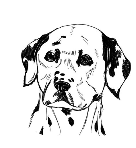 dalmatian fire dog coloring pages coloring pages pictures