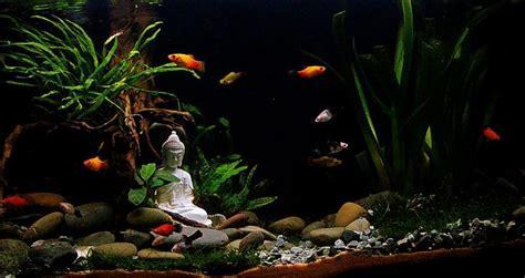 aquarium design kolkata 1000 ideas about goldfish aquarium on pinterest