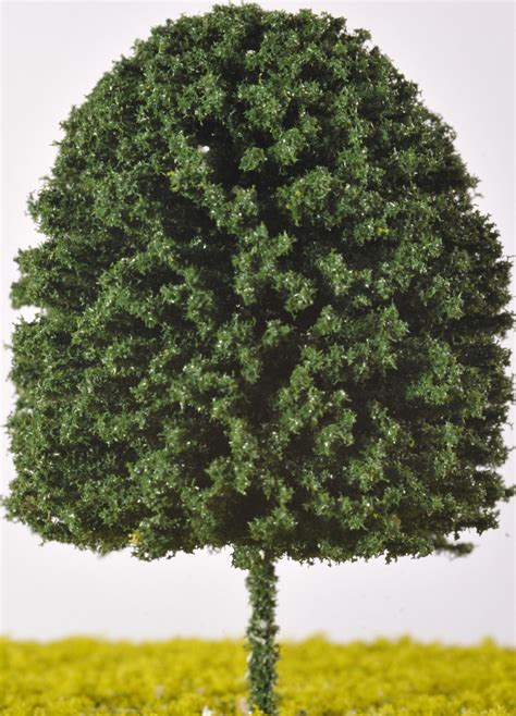 deciduous tree click picture to see prices and options the model tree shop