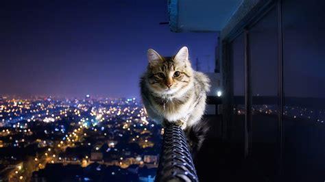 cat wallpaper deviantart cat wallpaper 2 by sylvesterst on deviantart
