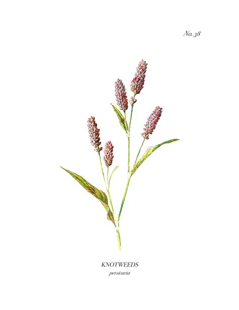 Beautiful Flower Pictures by Vintage Wild Flower Botanical Prints A Burst Of Beautiful
