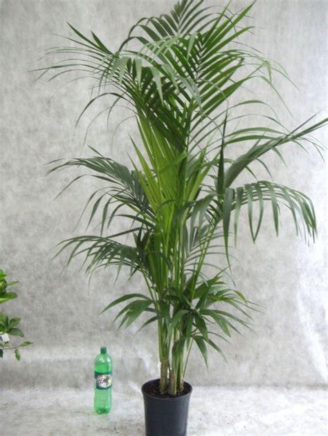 Pflanzen Pralle Sonne by Die Besten 25 Pflanzen F 252 R Pralle Sonne Ideen Auf