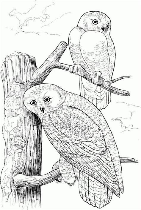 coloring pages birds of prey birds of prey coloring pages