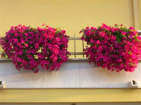 piante da arredo arredo terrazzo piante da terrazzo come arredare il